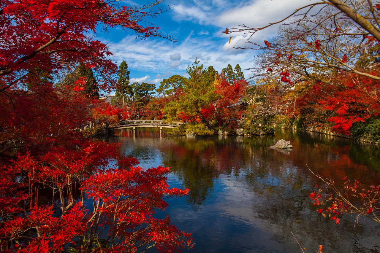 autum leaves Kyoto The Real Japan Rob Dyer