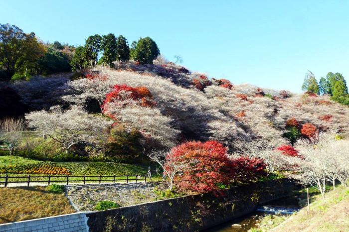 Obara, Toyota autumn The Real Japan Rob Dyer