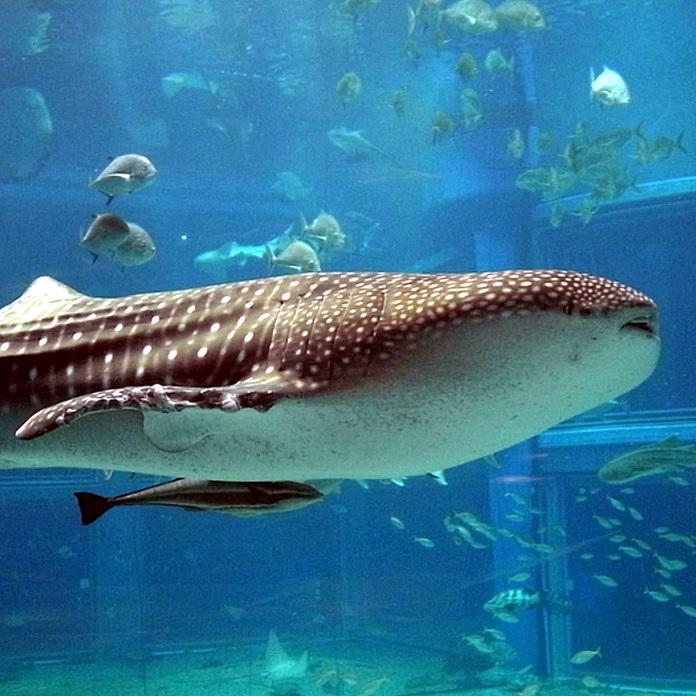 Osaka Aquarium Kaiyukan The Real Japan